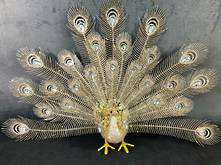 CHAMPAGNE PEACOCK SPLAYED TAIL