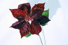 RED BURGUNDY VELVET POINSETTIA