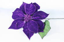 DARK PURPLE VELVET POINSETTIA