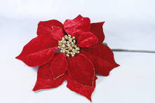 RED AND GOLD VELVET POINSETTIA