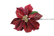 BURGANDY RED VELVET POINSETTIA