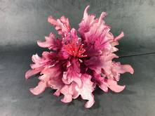 35CMD PINK POINSETTIA