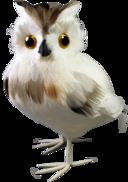 25CMH FEATHER OWL