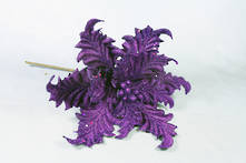 PURPLE VELVET ACANTHUS FLOWER