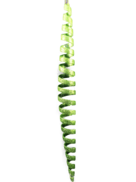 30CML GREEN SPIRAL HANGER