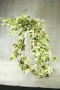 WHITE TIPPED GREEN IVY BUNCH