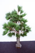 135CMH QUIRKY PINE CHRISTMAS TREE