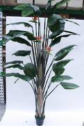 LARGE BIRD OF PARADISE 2.5M