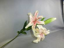 ORIENTAL PINK LILY