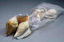 SHELL PACK 5 NATURAL UNBLEACH MIXED SHELLS